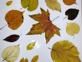 ¿Pensabais que todas las hojas son iguales?